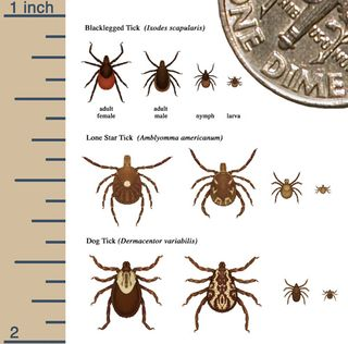 TICKS CDC_TickSizeComparison